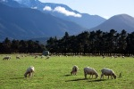 A Farm In New Zealand